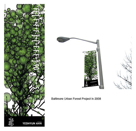 Urban Forest Project in Balitmore